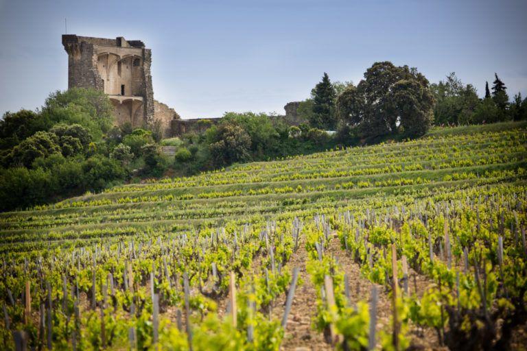 Vignes Chateauneuf-du-Pape